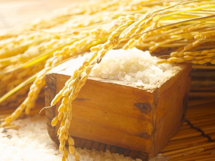 実は麦じゃない!はと麦はイネ科の植物
